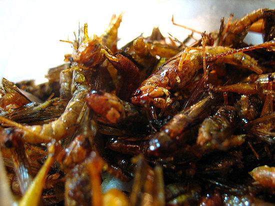 อาหารที่น่ากินที่สุด(มั้ง) Grasshoppers.preview