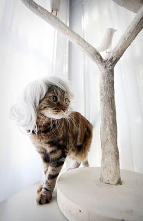 http://images.teamsugar.com/files/upl0/1/15300/06_2008/kitty%20wig1.jpg