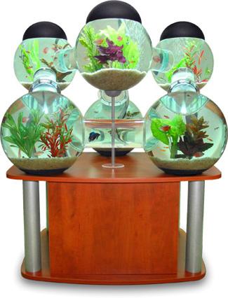 Silverfish Aquarium for Your Pampered Fish POPSUGAR Pets