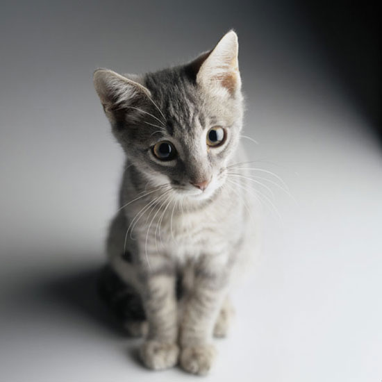 Cat New Home Won T Stop Meowing