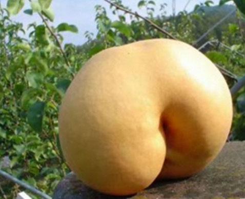 v-zhope-frukt