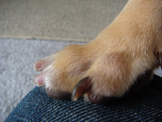 how to stop bleeding on my dogs nail