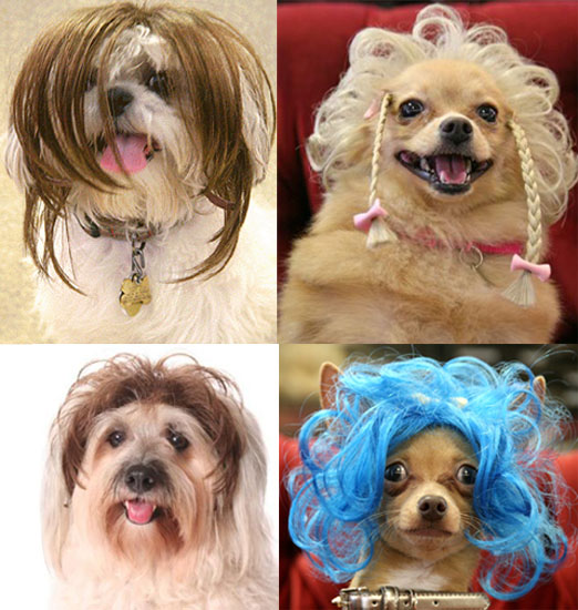 Wiggles Pet Wigs 110