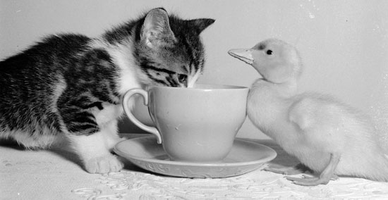 We Don T Have Kitten Drink Yet