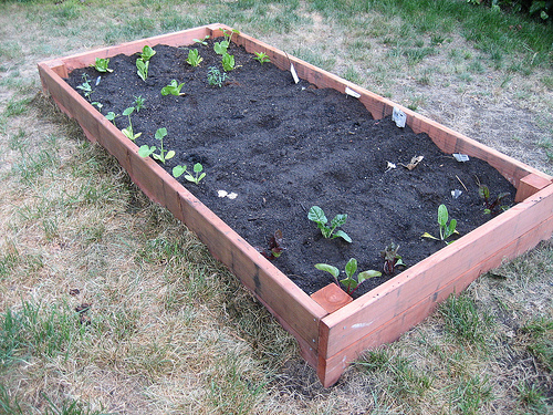 diy planting your garden box popsugar home
