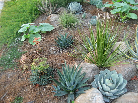 Cool Idea Drought Resistant Landscaping With a Twist