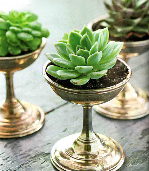 Would you use succulents as centerpieces at a wedding or a party