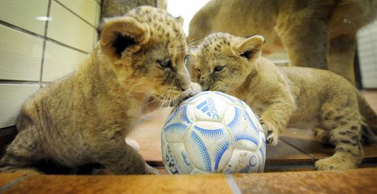 2 Little Lions   Popsugar