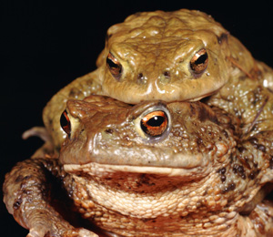 You don't have to worry about getting warts from kissing toads (not ...