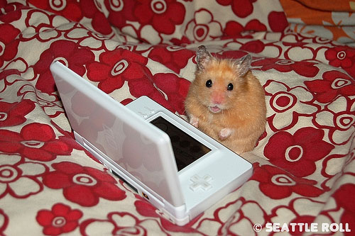http://images.teamsugar.com/files/users/1/13254/18_2007/hamster.jpg