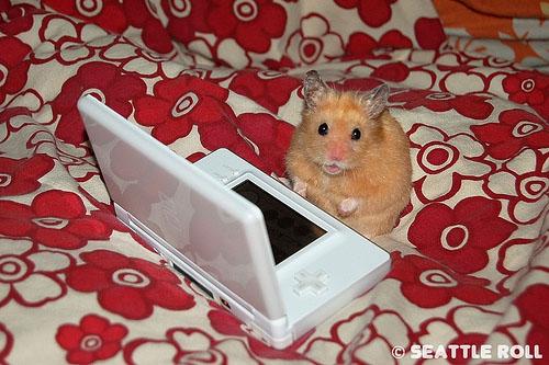 http://images.teamsugar.com/files/users/1/13254/18_2007/hamster.jpg