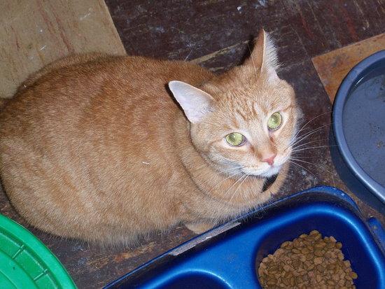 Ginger the female dog, I mean cat