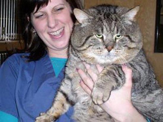 Goliath Fat Cat 53