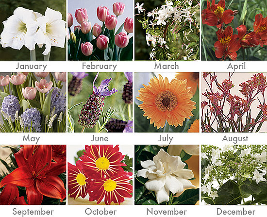 What Are The Flowers For Each Month Sistem As Corpecol